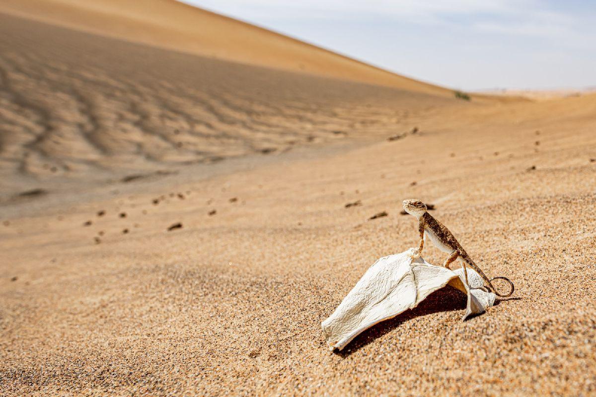 Агама с головой арабской жабы в дюнах - Дэвид Габис