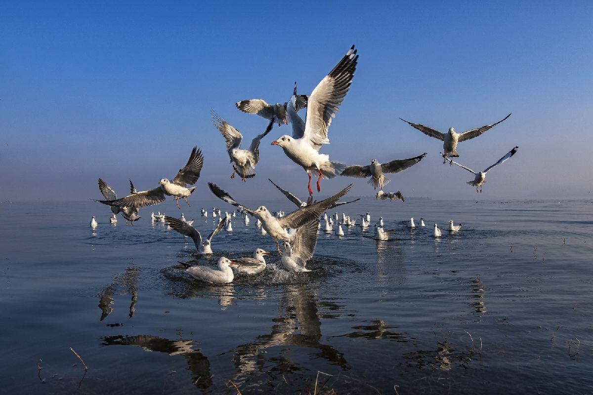 Птицы - Аунг Чан Тхар