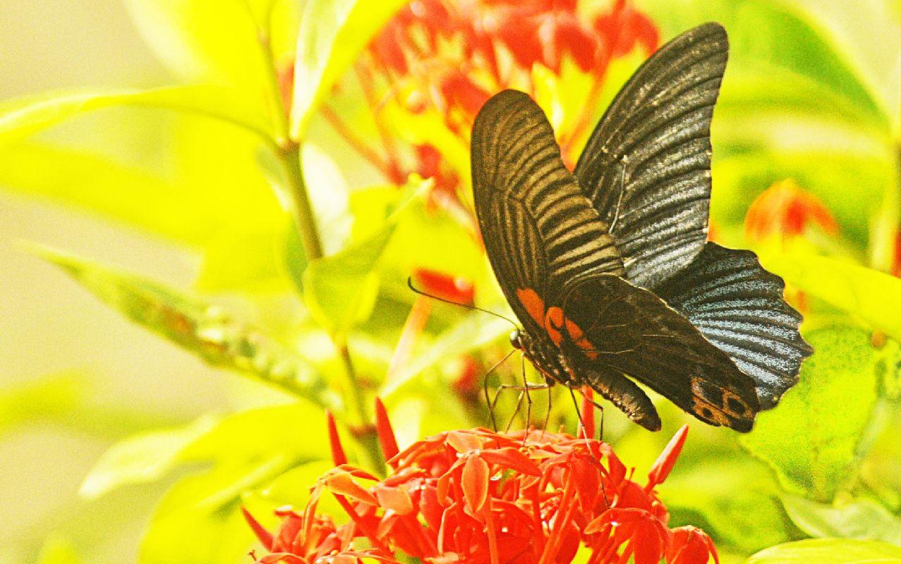 Бабочка и цветок - Тран Данг Ван