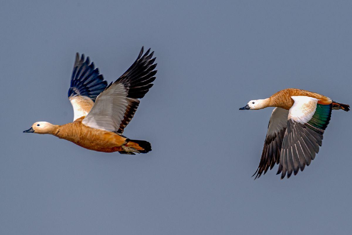 Пара в воздухе - Хашинур Реза