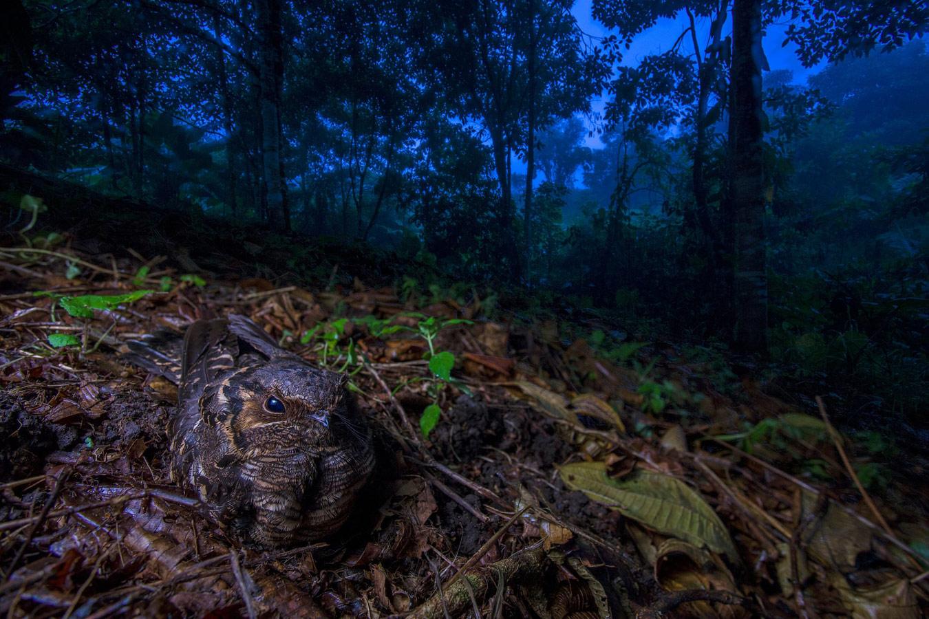 Быть матерью, © Хайме Кулебрас, Испания, Победитель категории «Птицы», Фотоконкурс «Европейский фотограф дикой природы»