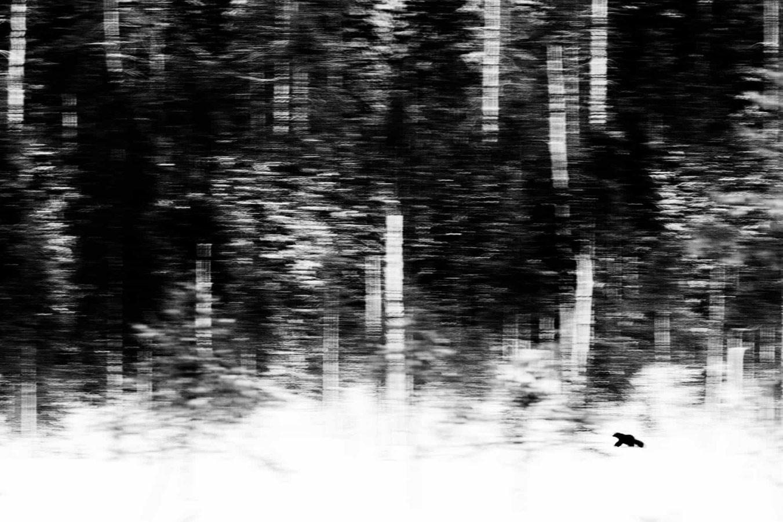 Одинокий охотник, © Ян ван дер Греф, Нидерланды, Победитель категории «Млекопитающие», Фотоконкурс «Европейский фотограф дикой природы»