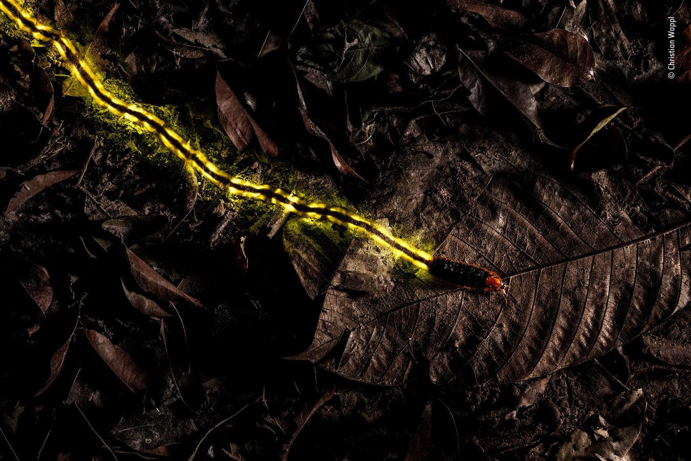 Прокладывающий путь, © Кристиан Ваппл, Австрия, Победитель категории «Другие животные», Фотоконкурс «Европейский фотограф дикой природы»