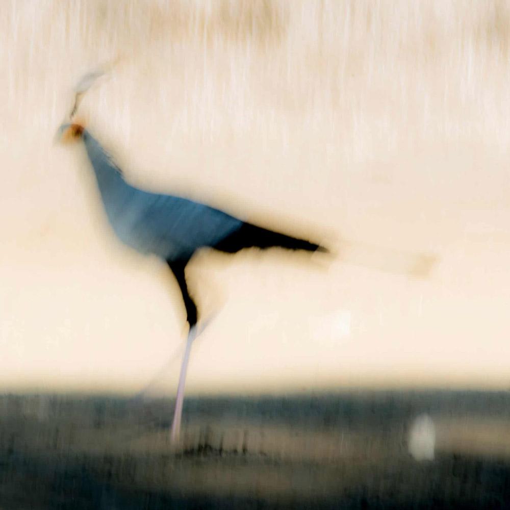 Яйцо, © Йохан Сиггессон, Швеция, Победитель категории «Природная студия», Фотоконкурс «Европейский фотограф дикой природы»