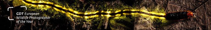 Фотоконкурс «Европейский фотограф дикой природы»