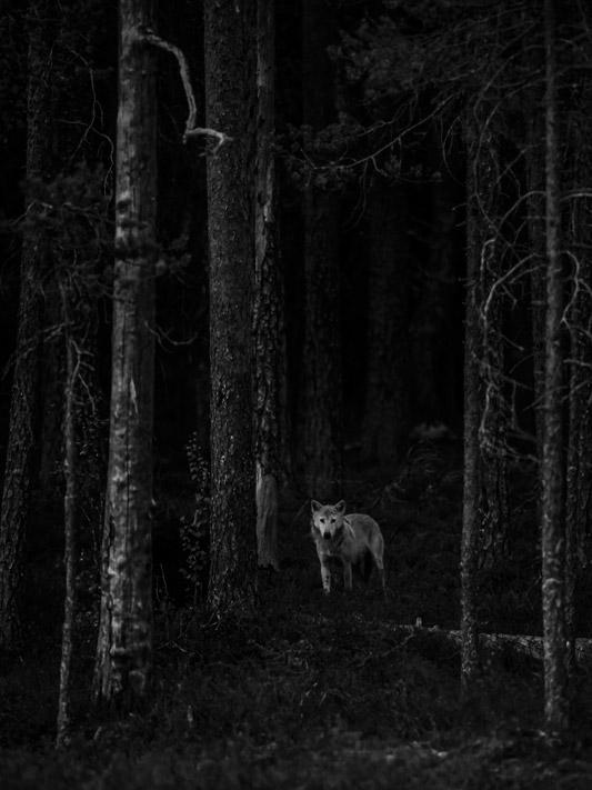Застенчивая встреча, © Лассе Куркела, 14 лет, Финляндия, Юный фотограф года, Конкурс природной фотографии Glanzlichter