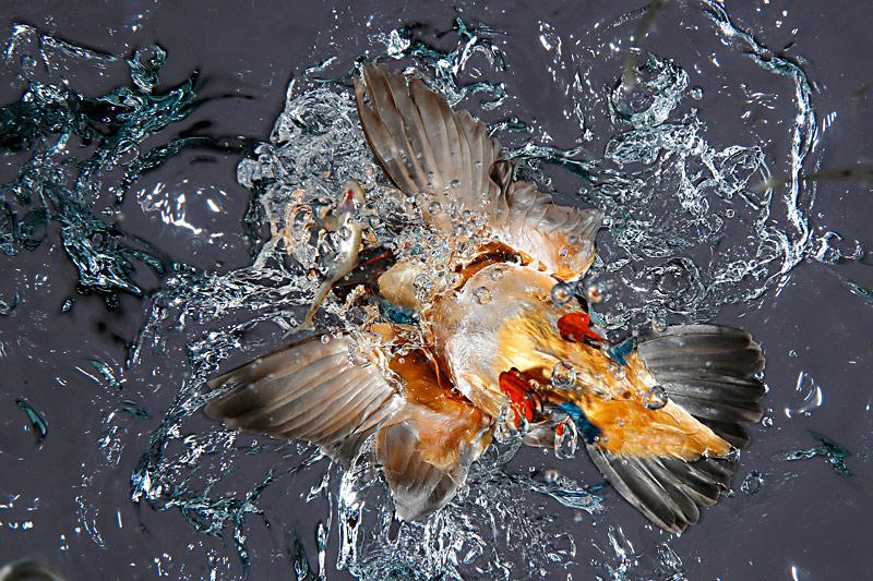 Вид снизу, © Хосе Луис Родригес, Испания, Победитель категории «Художники на крыльях», Конкурс природной фотографии Glanzlichter