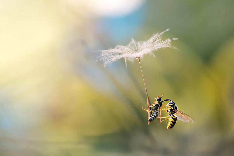Атака, © Джузеппе Бонали, Италия, Победитель категории «Моменты в природе», Конкурс природной фотографии Glanzlichter
