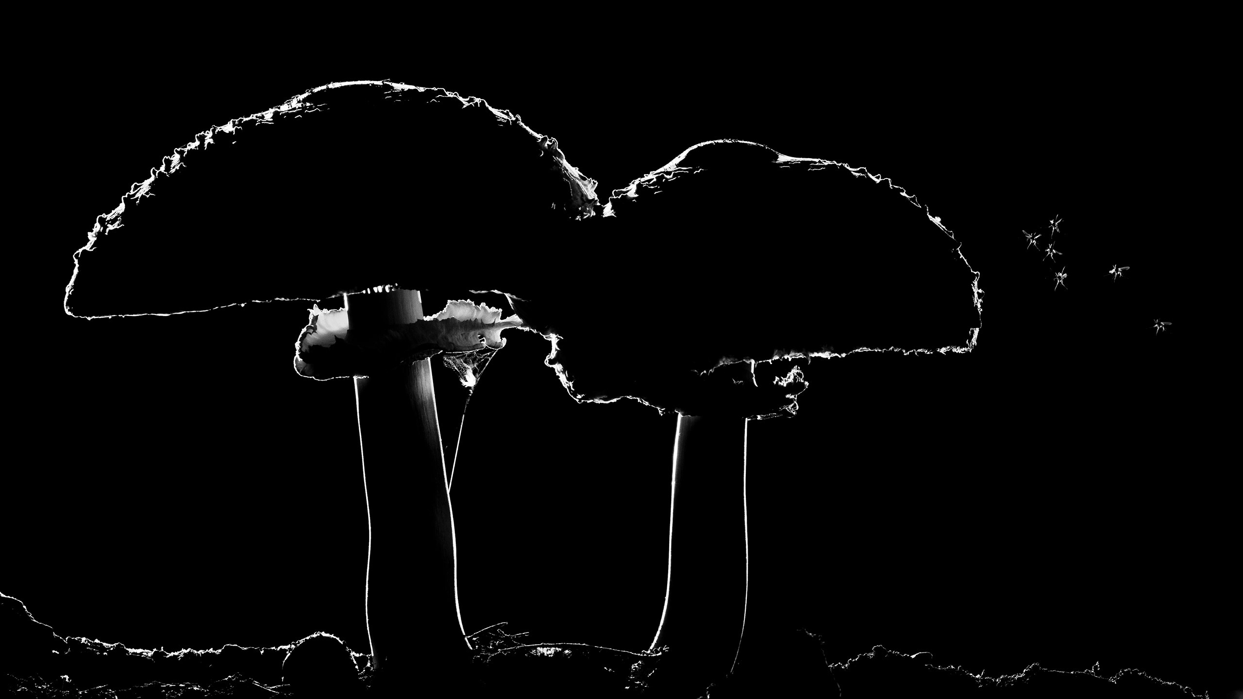 Комариные грибы, © Цаба Гонье, Победитель, Фотоконкурс «Золотая Черепаха»