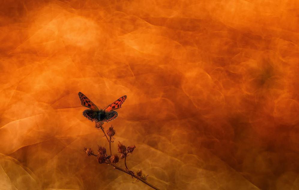 Бабочка, © Луис Клименте Родригес, Второе место, Фотоконкурс «Золотая Черепаха»