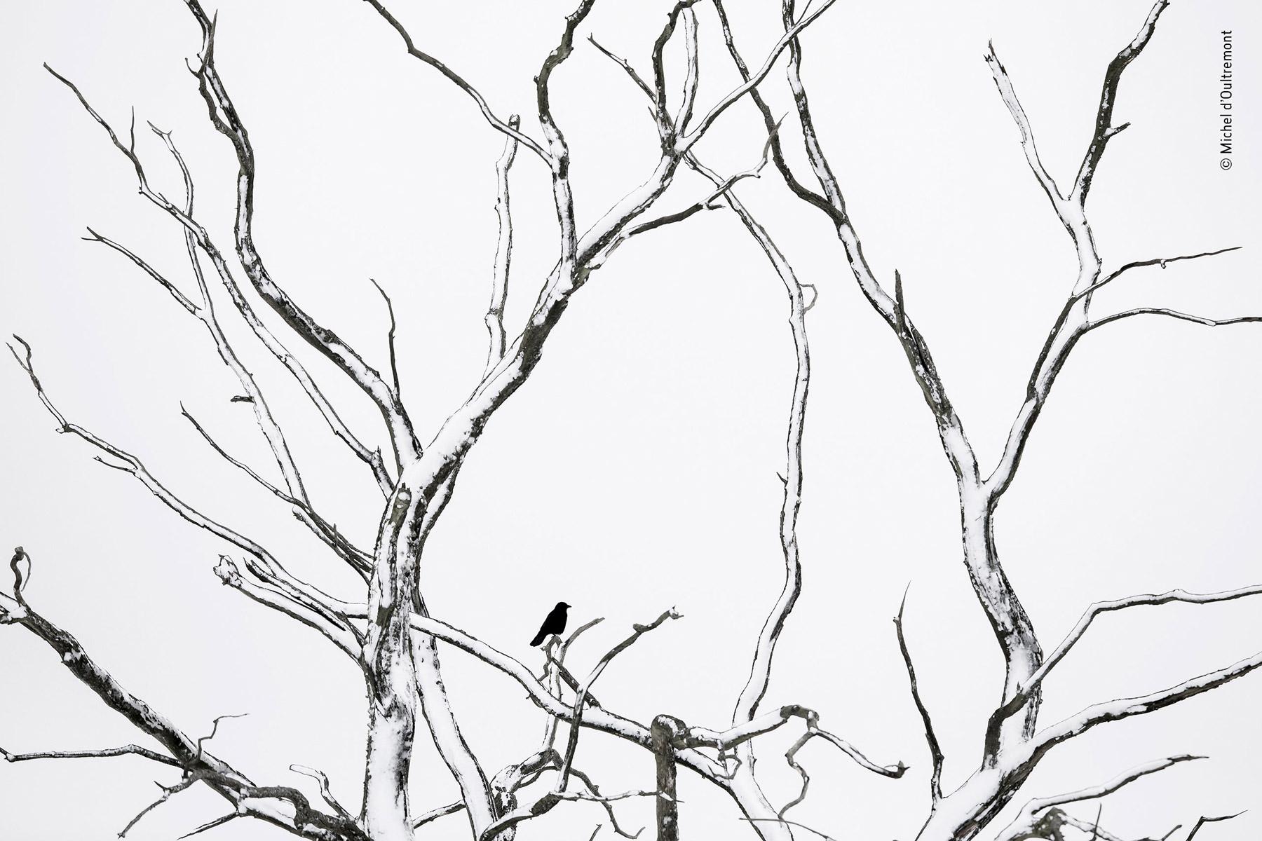 Линии, © Мишель Олтремон, Третье место, Фотоконкурс «Золотая Черепаха»