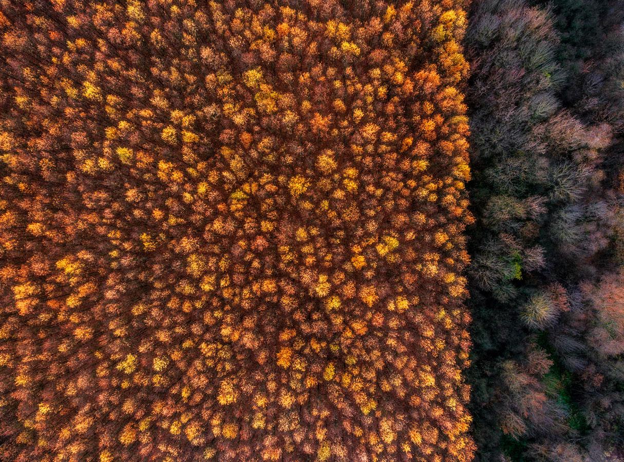 Два леса, © Цаба Дароци, Победитель, Фотоконкурс «Золотая Черепаха»