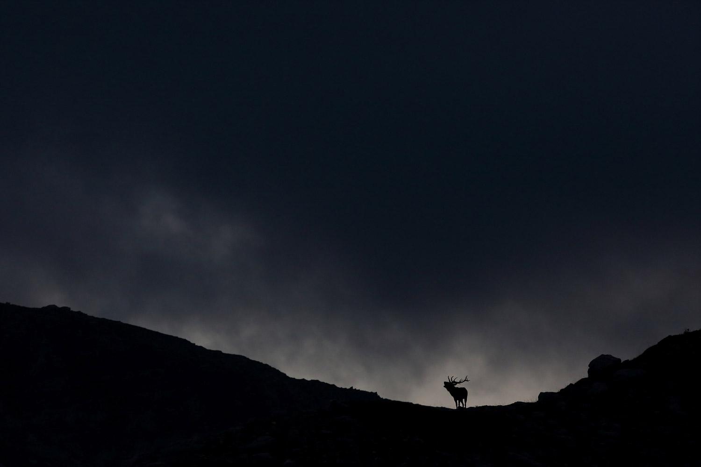 Олень на холме, © Франсуа Новицки, Победитель, Фотоконкурс «Золотая Черепаха»