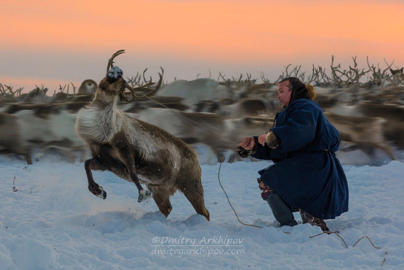 Оленевод, © Дмитрий Архипов, Второе место, Фотоконкурс «Золотая Черепаха»