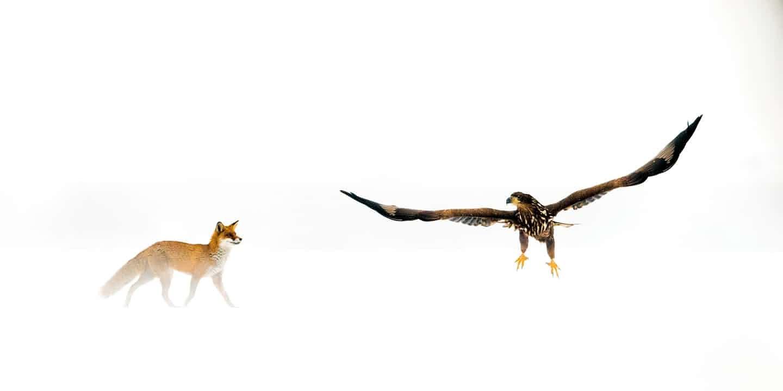 Территория, © Бенце Мате, Победитель, Фотоконкурс «Золотая Черепаха»