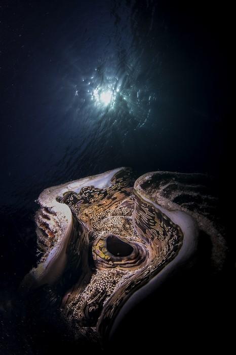 Тридакна, © Франческо Пасиенца, Третье место, Фотоконкурс «Золотая Черепаха»