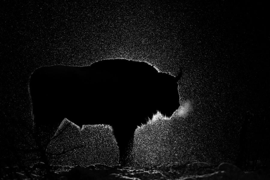 Ночь, © Игорь Зубков, Второе место, Фотоконкурс «Золотая Черепаха»