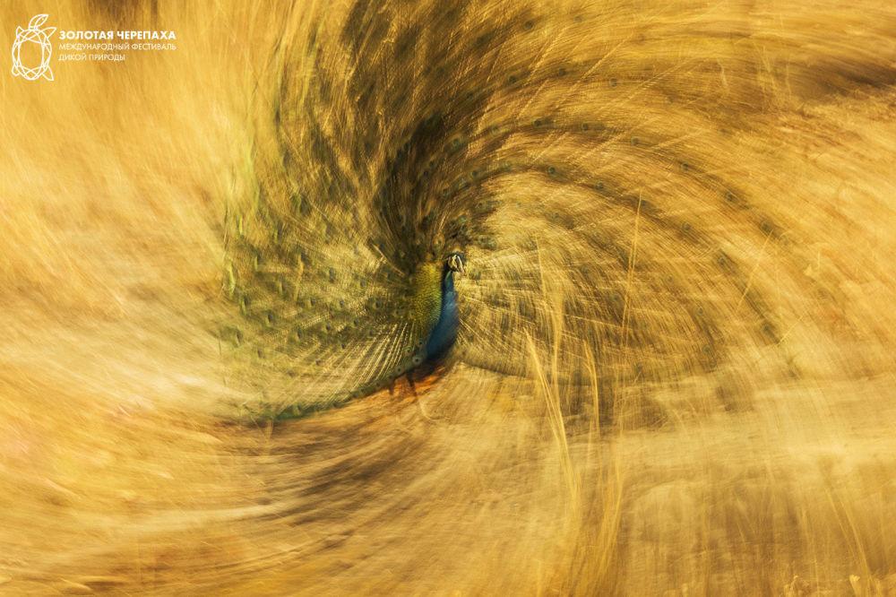 Королевская спираль, © Хосе Пескуэро, Третье место, Фотоконкурс «Золотая Черепаха»