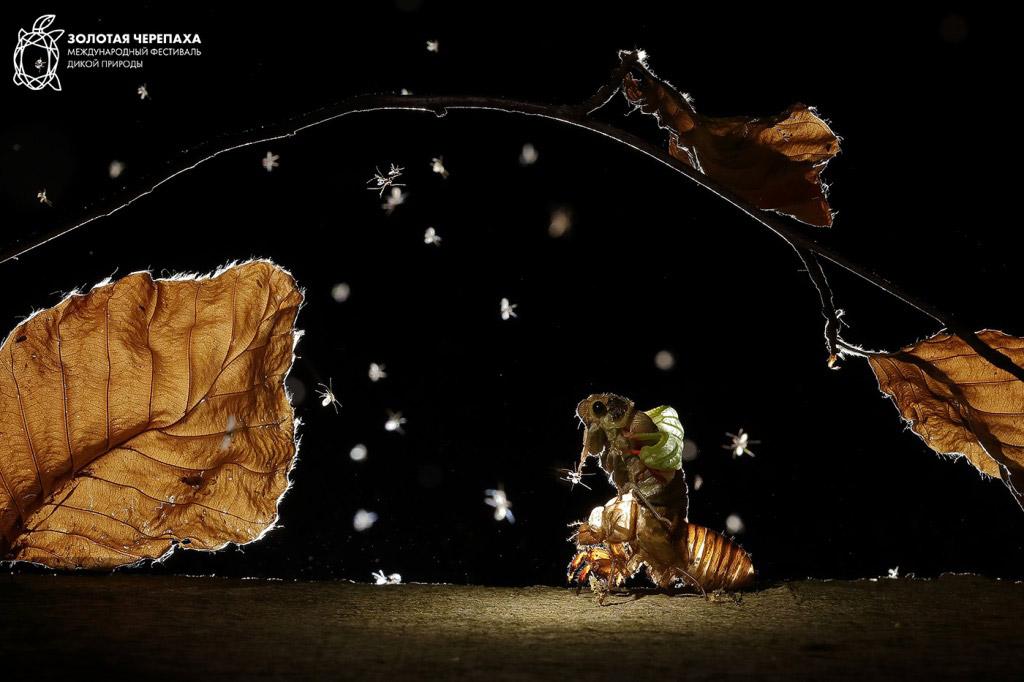 Сказка на ночь, © Балинт Винже, Второе место, Фотоконкурс «Золотая Черепаха»