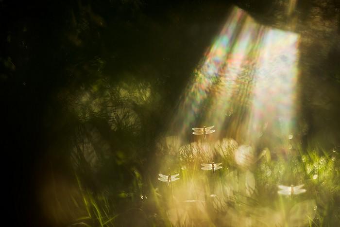 Праведные души, © Татьяна Нерикова, Третье место, Фотоконкурс «Золотая Черепаха»