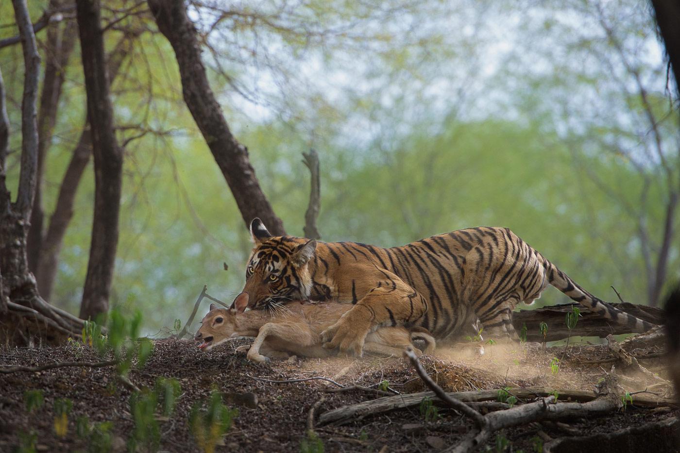 Ловкач, © Томас Вижаян, Второе место, Фотоконкурс «Золотая Черепаха»