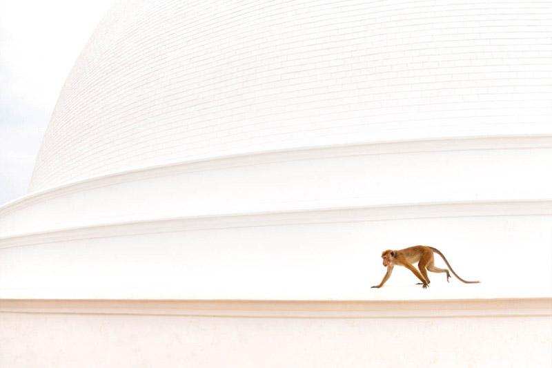 На Дагобе, © Тибор Керц, Второе место, Фотоконкурс «Золотая Черепаха»
