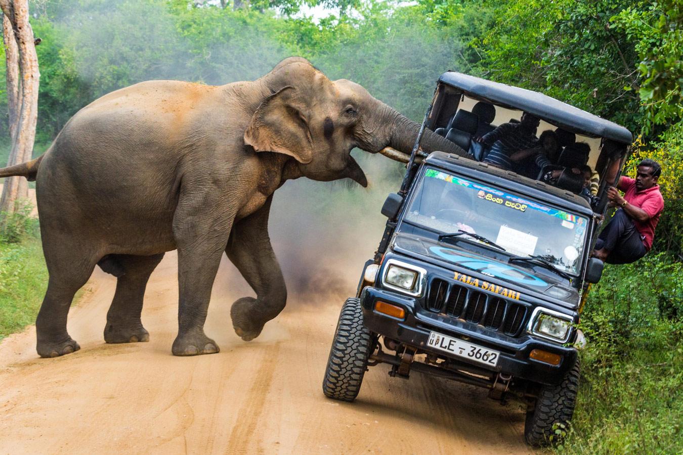 Это мои джунгли!, © Сергей Савви, Третье место, Фотоконкурс «Золотая Черепаха»