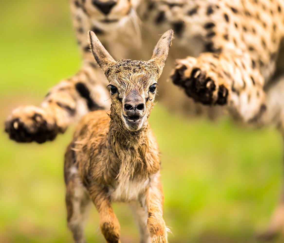 Охота, © Арнфинн Йохансен, Третье место, Фотоконкурс «Золотая Черепаха»