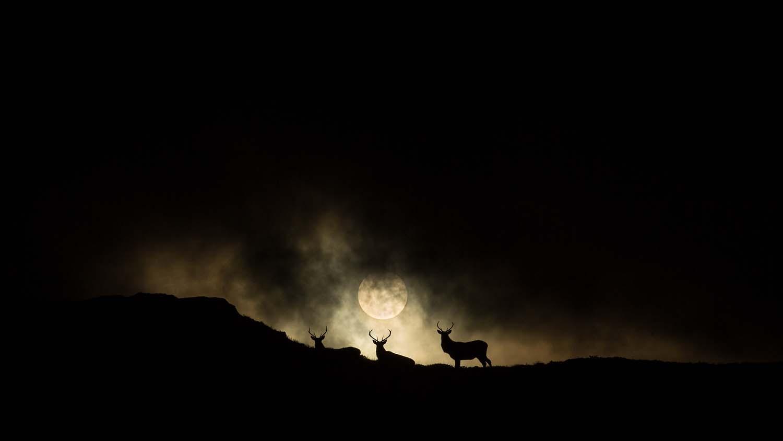 Солнечный свет, © Фабиен Дубесси, Победитель, Фотоконкурс «Золотая Черепаха»