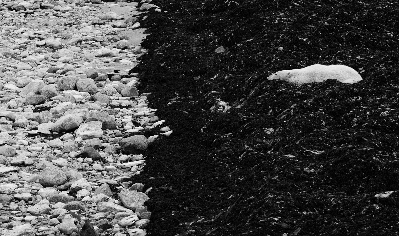 Ожидание, © Цаба Токоли, Второе место, Фотоконкурс «Золотая Черепаха»