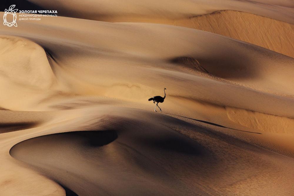 Страус, © Владимир Богданов, Третье место, Фотоконкурс «Золотая Черепаха»