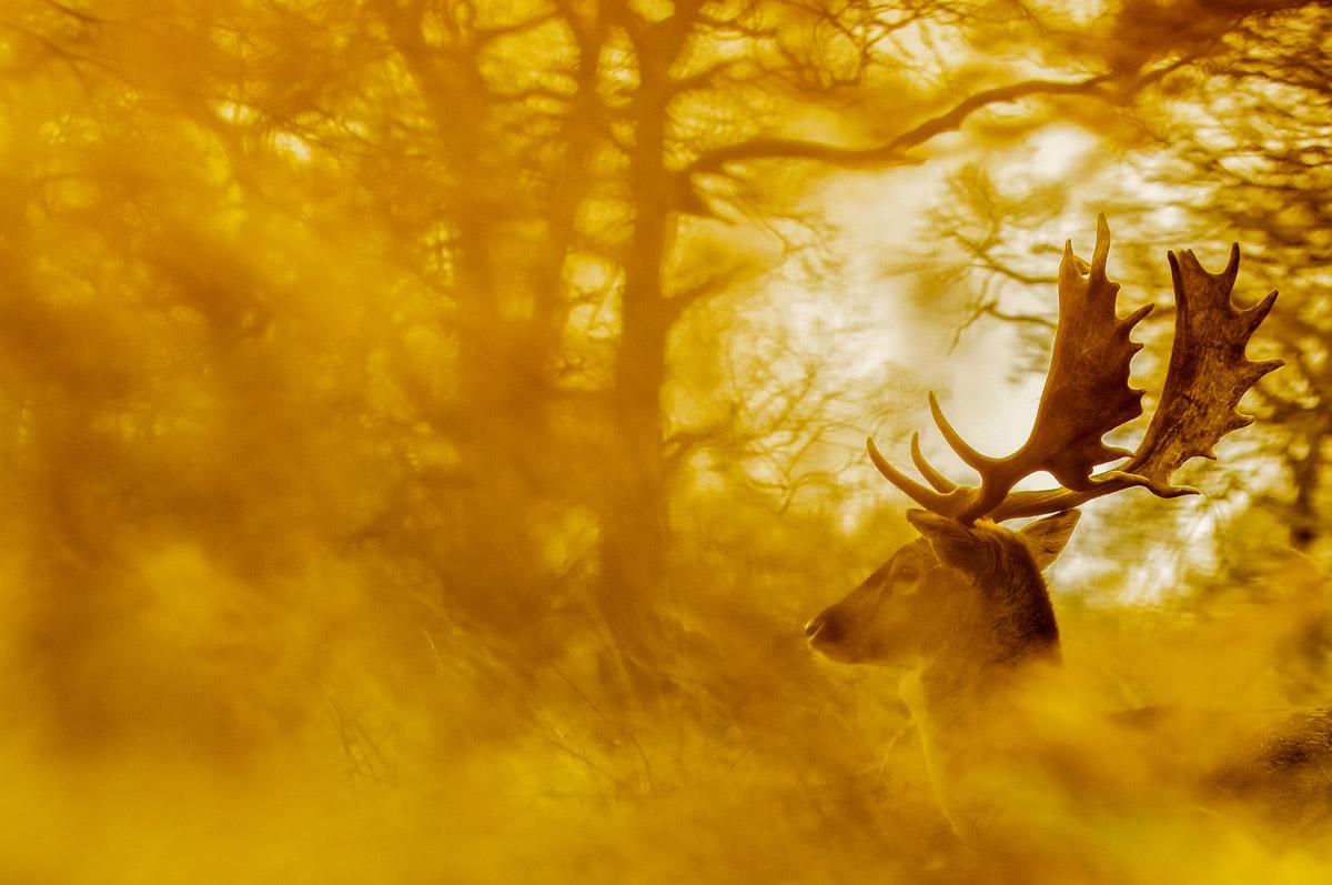 Лань, © Мануэль Энрике Гонсалес Кармона, Победитель, Фотоконкурс «Золотая Черепаха»