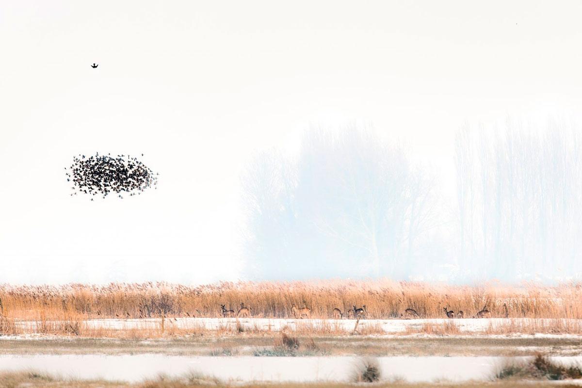 """Режим невидимки"", © Гервин Киебум"
