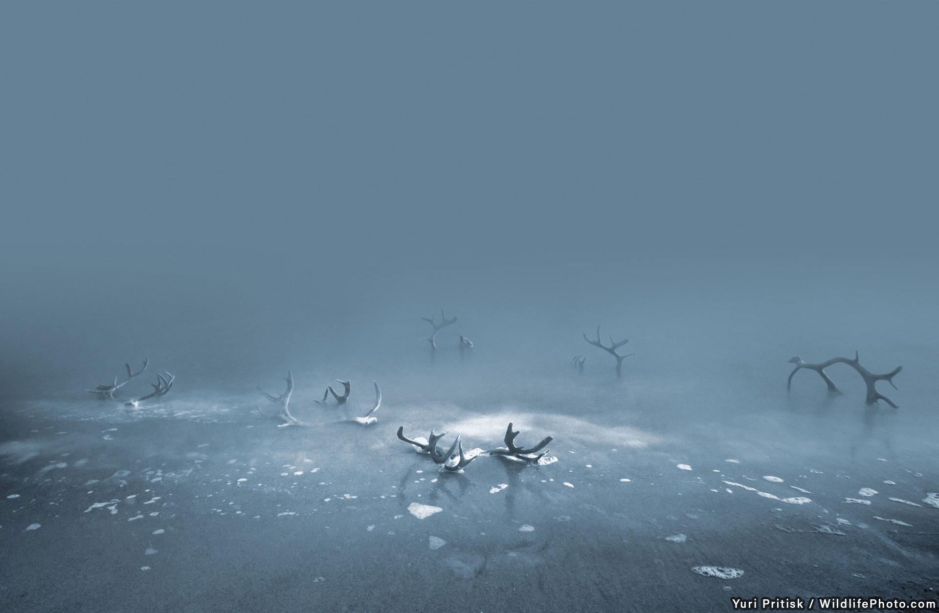 Побережье убийц, © Юрий Притиск, Высокая оценка, Фотоконкурс «Места обитания и ландшафты»