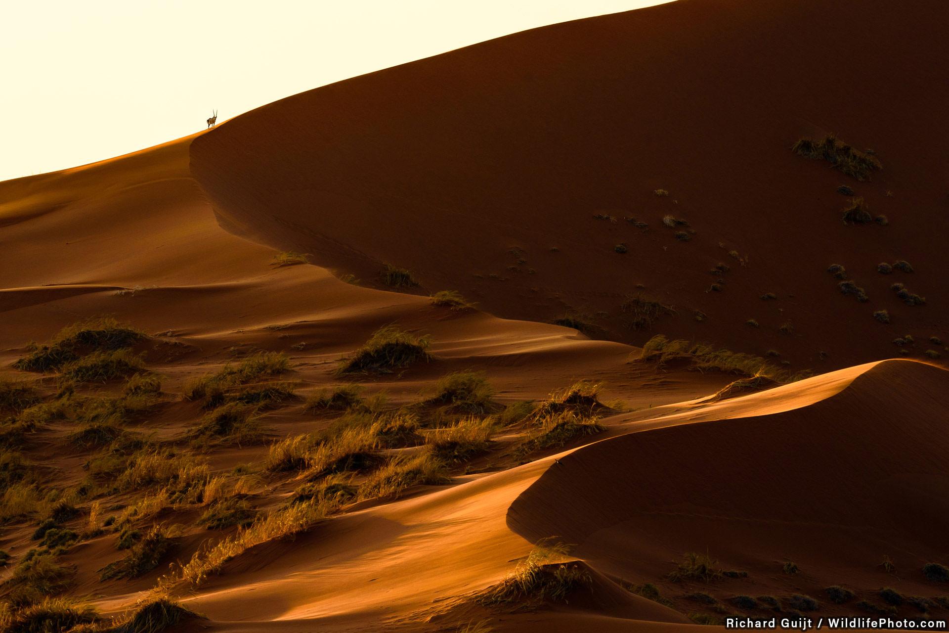 Жизнь в пустыне, © Ричард Гийт, Высокая оценка, Фотоконкурс «Места обитания и ландшафты»