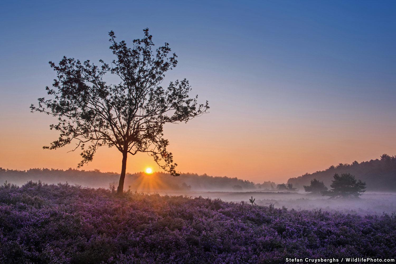 Восход солнца в Блекерхайде, © Стефан Кройсбергс, Высокая оценка, Фотоконкурс «Места обитания и ландшафты»