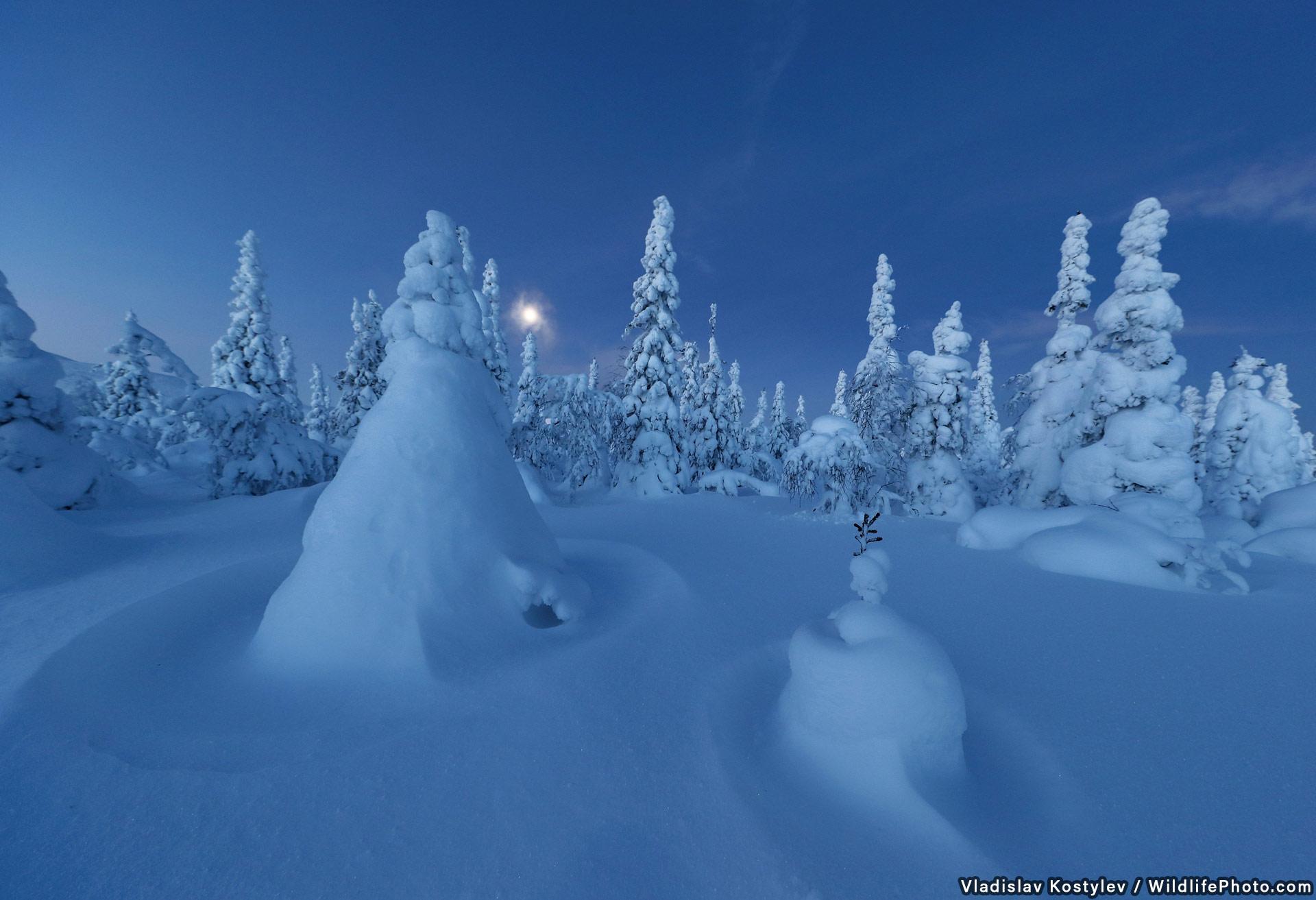Зимний лес, © Владислав Костылев, Высокая оценка, Фотоконкурс «Места обитания и ландшафты»