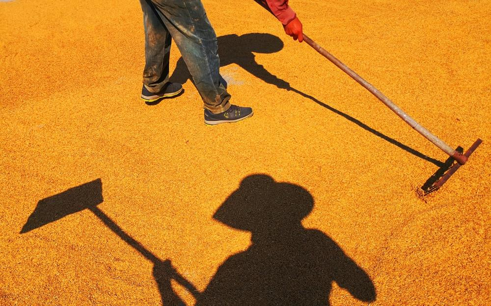 Солнце сияет на солнце, © Вэнь Чжичэн - Вэнь Си Ян Яньчэн, Победитель категории, Конкурс мобильной фотографии Huawei
