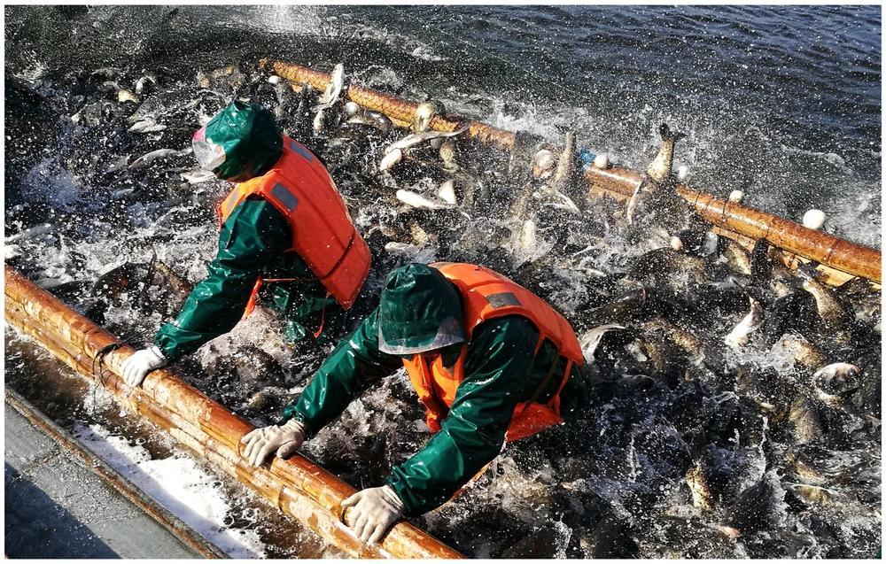 Хороший улов, © Лао Янг, Конкурс мобильной фотографии Huawei