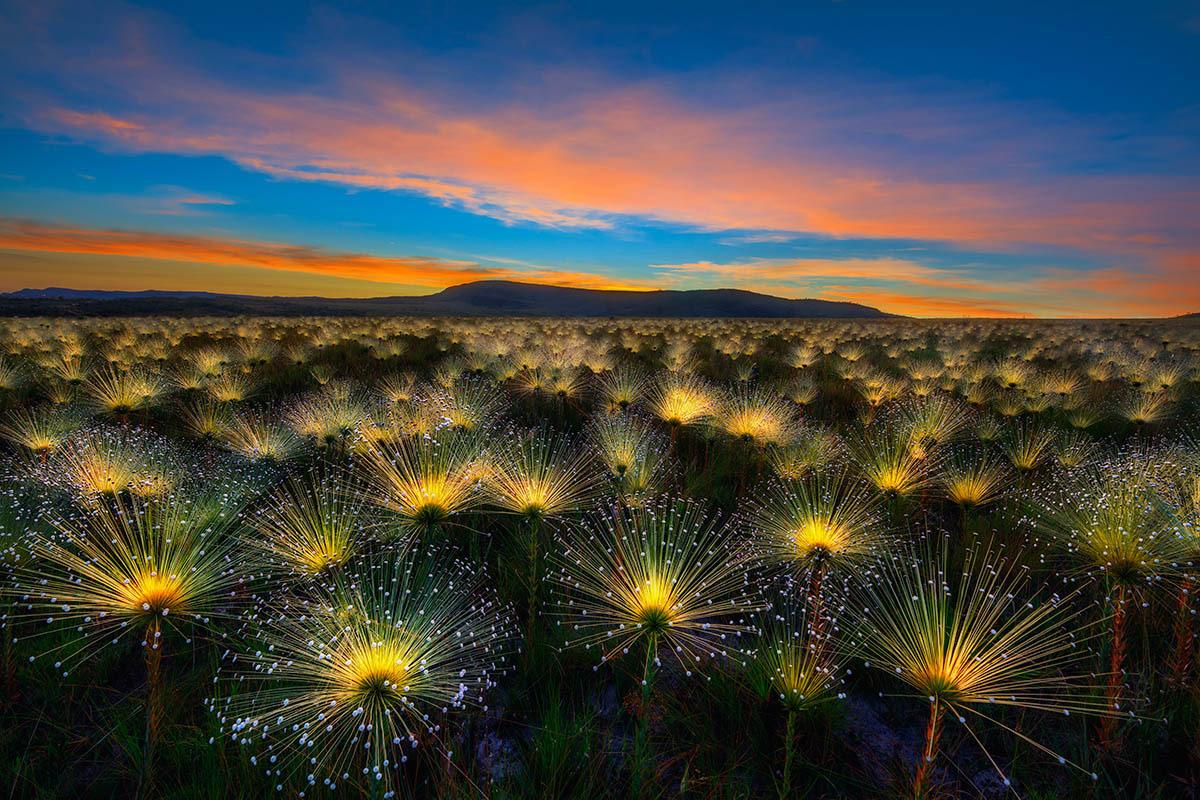 Восход солнца в Серрадо, © Марсио Кабрал, Фотоконкурс «Международный садовый фотограф года»