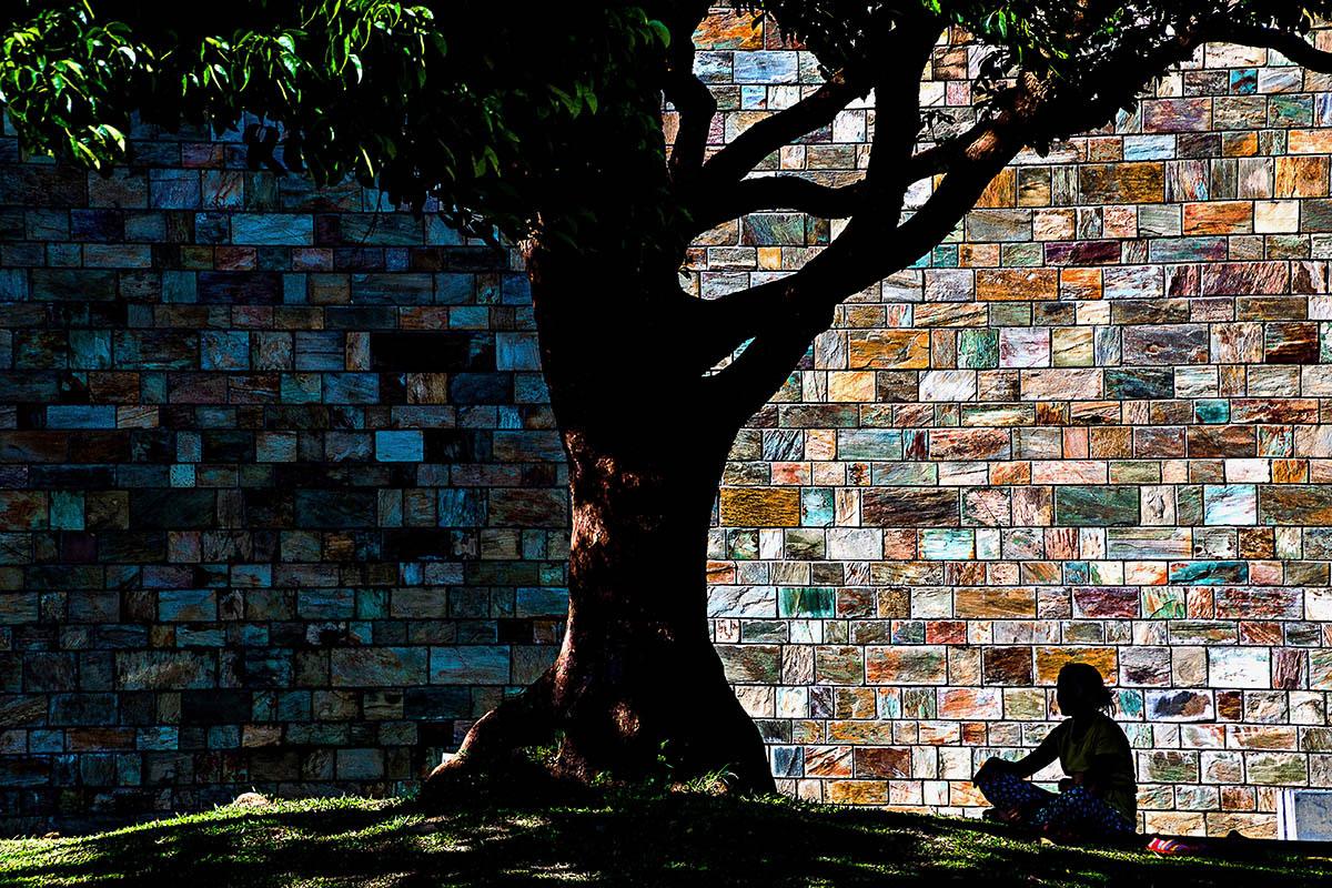 Саморефлексия, © Ингтинг Ши, 3-е место, Фотоконкурс «Международный садовый фотограф года»