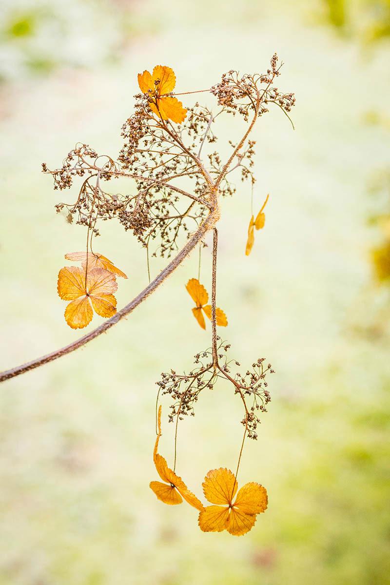 Золотой свет, © Раймонд Джонс, 2-е место, Фотоконкурс «Международный садовый фотограф года»