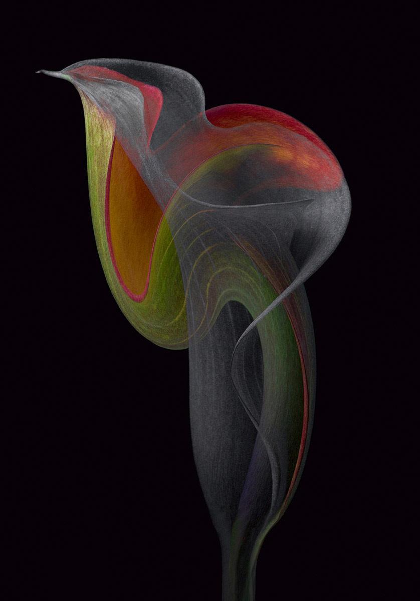 Экзотический вихрь, © Синди Вондран, 3-е место, Фотоконкурс «Международный садовый фотограф года»