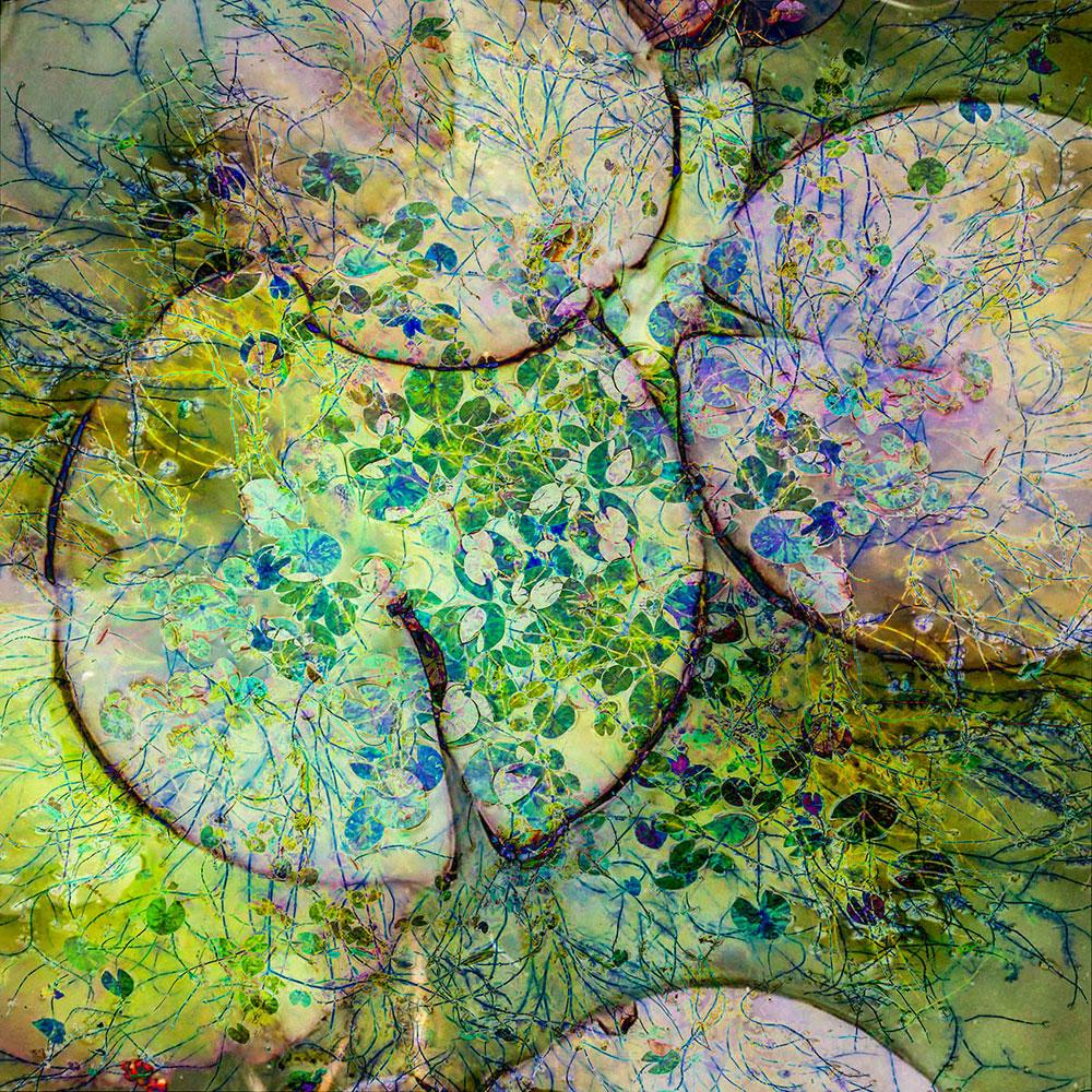 Кувшинки, © Кэтрин Балдок, 1-е место, Фотоконкурс «Международный садовый фотограф года»
