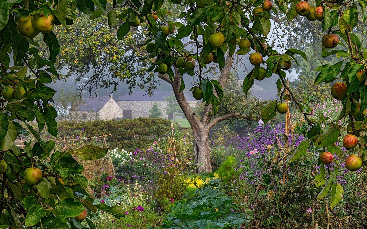 Утренний туман и спелые плоды, © Найджел МакКолл, 1-е место, Фотоконкурс «Международный садовый фотограф года»