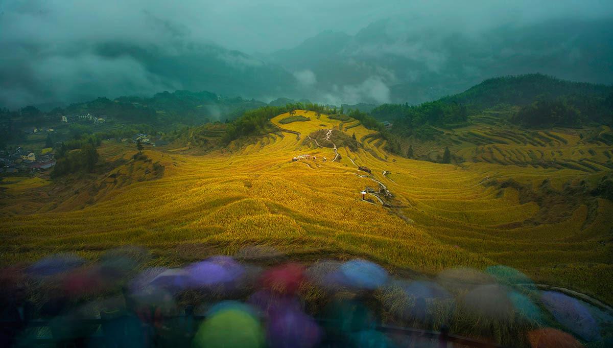 Вид на хороший урожай, © Шаофэн Чжан, 2-е место, Фотоконкурс «Международный садовый фотограф года»