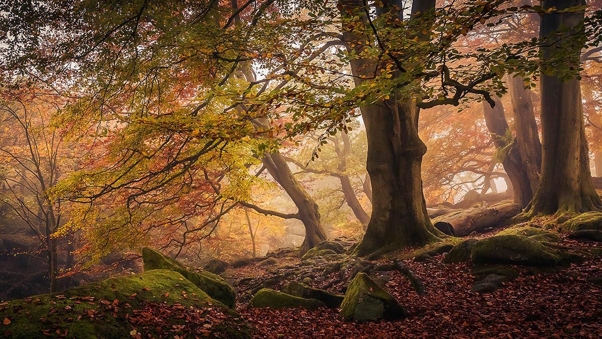 Осень в ущелье Пэдли, © Дэйв Филдхаус, 1-е место, Фотоконкурс «Международный садовый фотограф года»