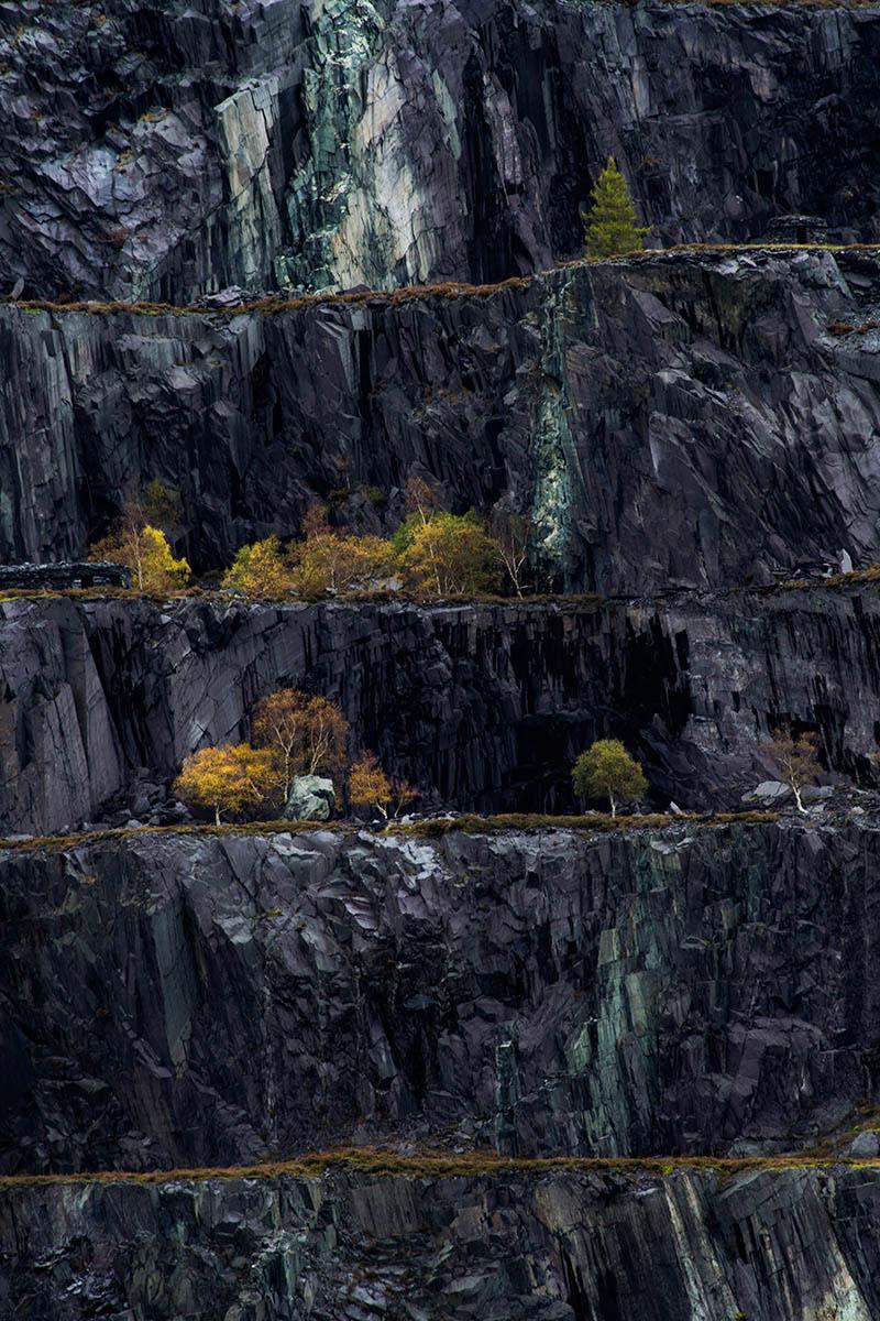 Узор Динорвика, © Мэтью Холланд, 2-е место, Фотоконкурс «Международный садовый фотограф года»