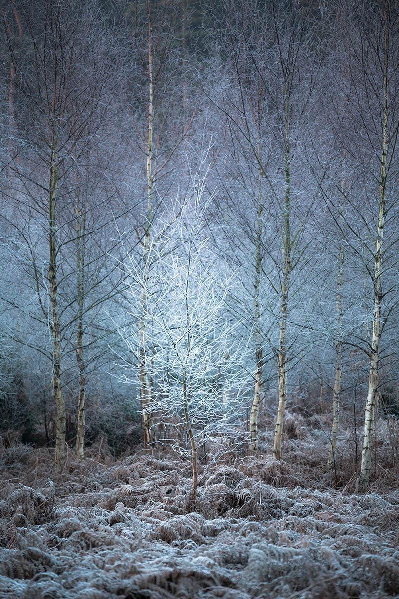 Морозное дерево в лесу, © Крис Дейл, 3-е место, Фотоконкурс «Международный садовый фотограф года»