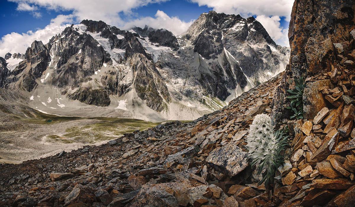 Дух Святой Горы, © Йи Фан, 2-е место, Фотоконкурс «Международный садовый фотограф года»